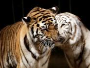 Augsburg: Bündnis wehrt sich gegen Verbot von Wildtieren im Zirkus