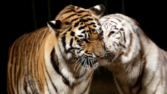 Augsburg: Bündnis wehrt gegen Verbot von Wildtieren im Zirkus
