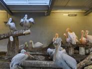 Vogelgrippe 2017: Vogelgrippe: Tierpark-Gesellschaft wehrt sich gegen Tötung von Vögeln
