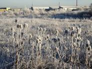 Bebauung des Biotops: Petition zur alten Flugplatzheide läuft