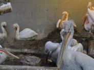 Zoo Augsburg: Stress durch Stallpflicht endet für manche Zoovögel tödlich