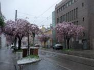 : Es ist wieder Winter in Augsburg- da kommt keiner dran vorbei