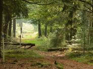 Bayerischer Wald: Der Goldsteig ist Bayerns wilde Ecke