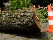 Augsburg: Aufschrei über jeden gefällten Baum nervt Pro Augsburg