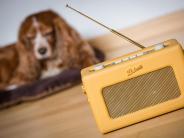 : Wenn Hasso Radio hört