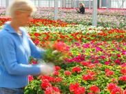 Gartencenter: So lässt Dehner Gärtnereien in der Region wachsen