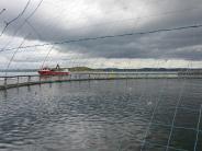 : Norwegen kämpft gegen die Lachslaus