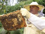 Augsburg: Entspannt im Umgang mit Bienen und Stichen