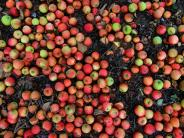 : So wird aus Äpfeln leckerer Saft