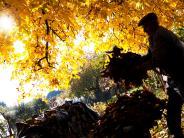 Herbst: Wohin mit dem vielen Laub?