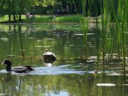 Augsburg: Studenten wollen die Campus-Schildkröte retten
