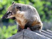 Augsburg: Der Augsburger Zoo hebt die Preise für Einzelkarten an