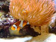 Augsburg: Ärger um Aquarium: Peta bietet Rockfabrik Roboterfische als Ersatz an