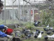 Augsburg: Wie Augsburg mit seinen Tauben umgeht