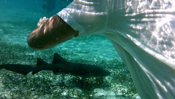 Karibik: Belize: Hai, ich schau dir in die Augen