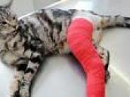 Tiere: Wer hilft, wenn Miezi und Bello krank werden