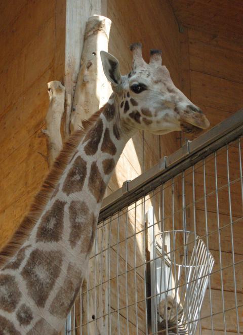 augsburg zoo dult und pl rrer an ostern lokales augsburg augsburger allgemeine. Black Bedroom Furniture Sets. Home Design Ideas