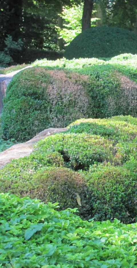 Augsburg botanischer garten aggressiver pilz setzt japangarten schlimm zu lokales augsburg - Japangarten pflanzen ...