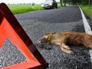 Bremsen oder hupen?: Mehr Wildwechsel im Frühling:Was Autofahrer beachten müssen