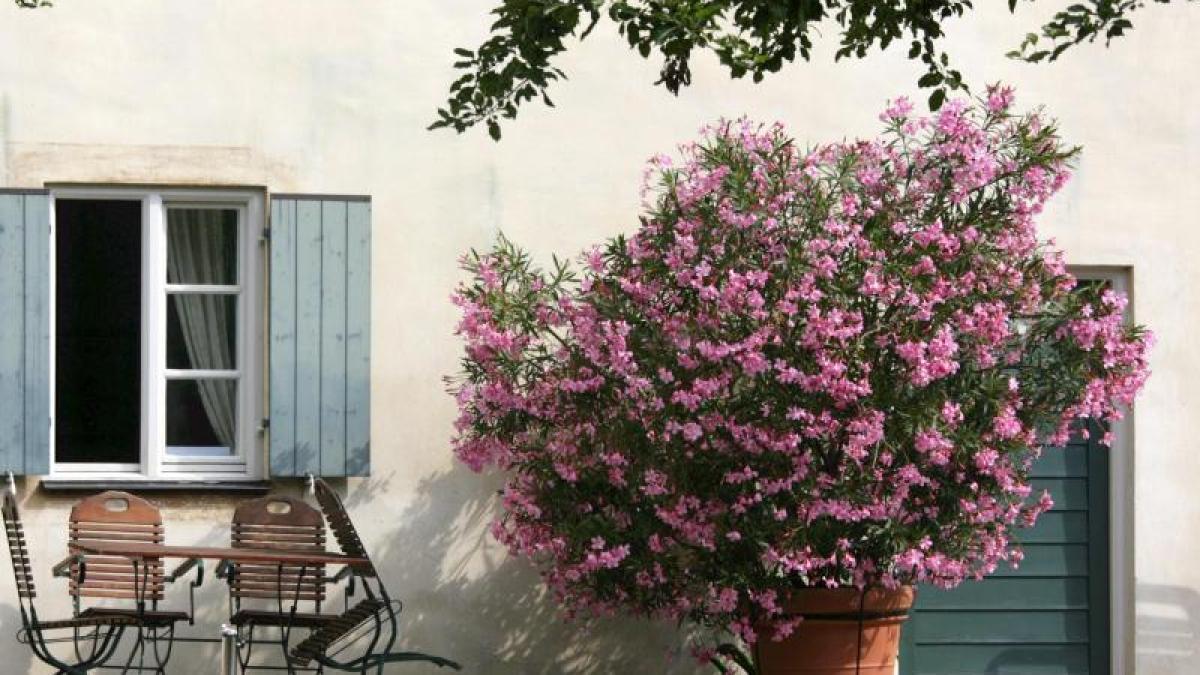 freizeit nasse f e und viel d nger der oleander speist. Black Bedroom Furniture Sets. Home Design Ideas