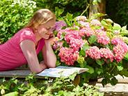 Sommergarten 25.5 und 27.5: Kein Sommer ohne Hortensien