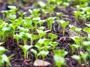Garten aktuell: Karge Flächen begrünen