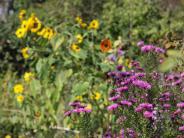 Gartenherbst 19.10. ENR + 21.10. NR+TW: Indian Summer im eigenen Garten pflanzen