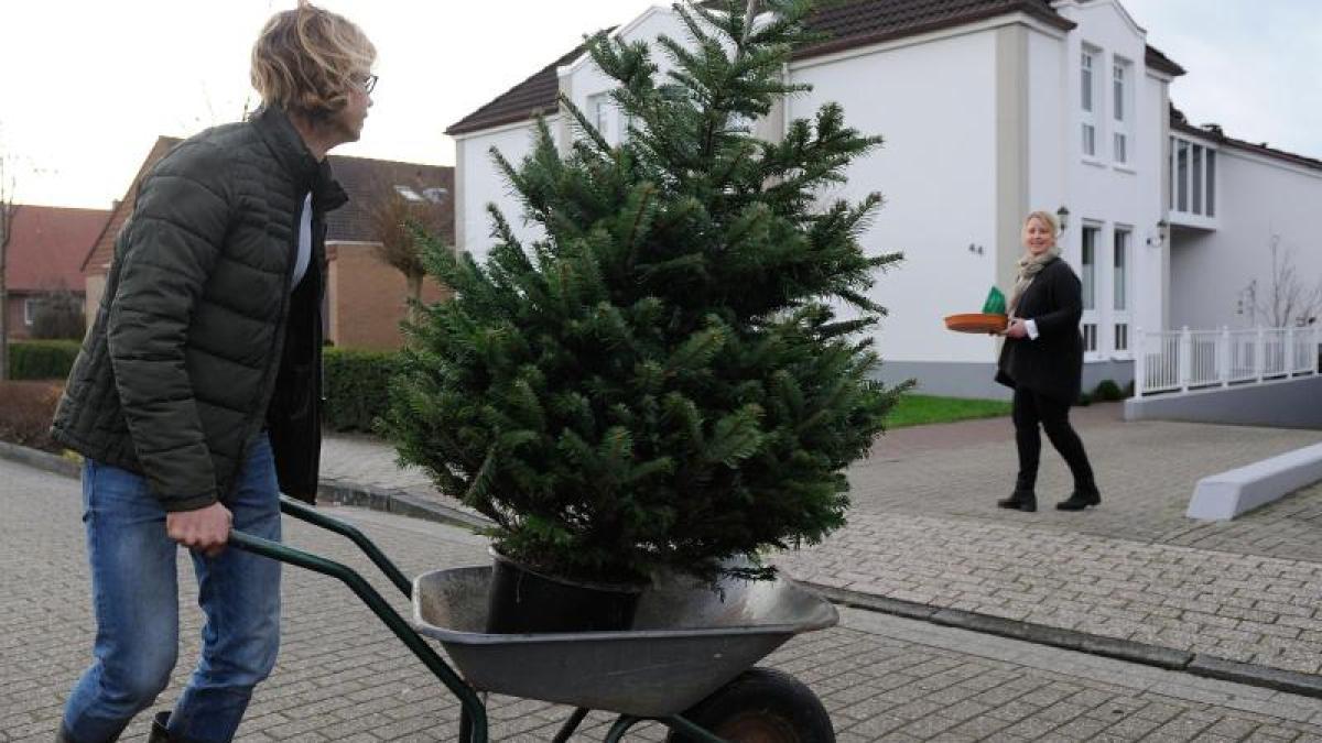 weihnachtsbaum im topf nordmanntanne w chst im garten nicht gut an bauen wohnen. Black Bedroom Furniture Sets. Home Design Ideas