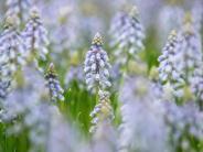 Frühling: Neue Saison, neues Gartenglück