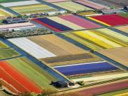 Big Business: Hollands Liebling: Die Tulpe und das große Geld