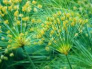 Tropische Zimmerpflanze: NachSchädlingsbefall: Ersatz für den Problemfall Zyperngras