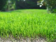 Sommergarten: Wellness für den Rasen