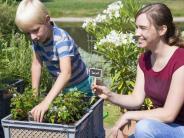 Tomaten aus dem Bäckerkorb: Kistengärten als neuer Trend: Tipps zum Anbau