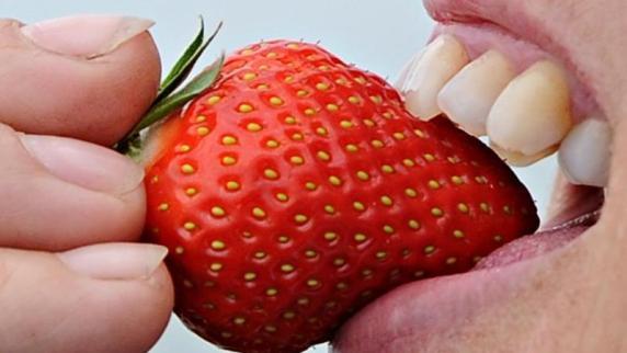 Blüte im September: Garten: Neue Erdbeeren bis spätestens Anfang August pflanzen