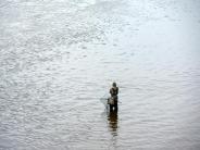 Barbe, Lachs und Co.: Elbe und Saale sind für viele Fische wieder ein Paradies
