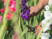 Es geht auch ohne Garten: Reiche Ernte am Straßenrand - Selbst pflücken ist in
