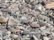 : Steine für den Garten
