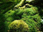 Wie eine Klimaanlage: Wohltuendes Grün ohne Aufregung: Ein Beet mit Moos gestalten