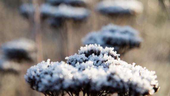 Aufgaben nach Wetterlage: Grüner Daumen? Gartenpflege im Winter