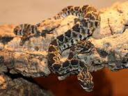 Westallgäu: Zweiköpfige Schlange im Allgäu stößt auch in den USA auf Neugierde