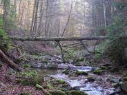 """Artenvielfalt: Naturwaldreservat """"Ammerleite"""": Ein bisschen Urwald"""