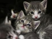 Region Augsburg: Immer mehr herrenlose Tiere: Wer kümmert sich um all die Katzen?