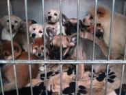 Tierschutz: Der illegale Welpenhandel boomt in Bayern