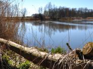 Naturschutz: Fragen und Antworten: Werden die Donau-Auen zum Nationalpark?