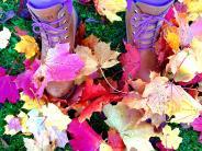Leserfotos: Goldener Oktober: Die schönsten Herbstbilder unserer Leser