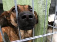 Geldsorgen: Viel Arbeit, wenig Geld: Hat Bayern kein Herz für Tiere?