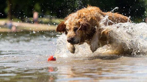 Wie viele Zhne hat ein erwachsener Hund? - willwissennet