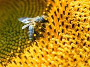 Naturschutz: Deutsche Bahn stellt Flächen für Bienen bereit