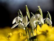 Frühlingsanfang 2017: Für die Meteorologen wird es jetzt schon Frühling