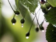 Region Augsburg: Wetteraussichten: Der Mai startet durchwachsen